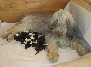 IDYLLA has puppies